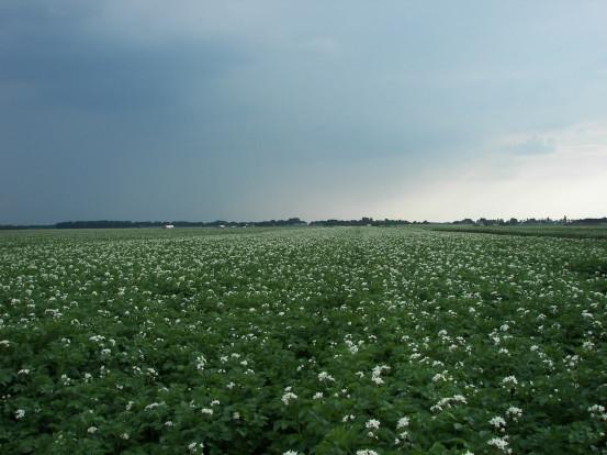 aardappelveld Loonbedrijf van den berg